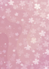 Back Cover - Cherry Blossom