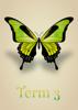 Artistic Butterflies - Term 3