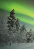 Aurora Borealis - Back Cover